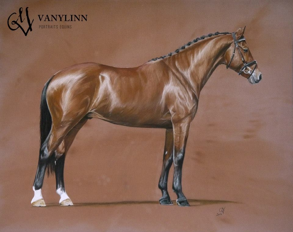 VANYLINN - Portraits equins - ZZ TOP étalon KWPN