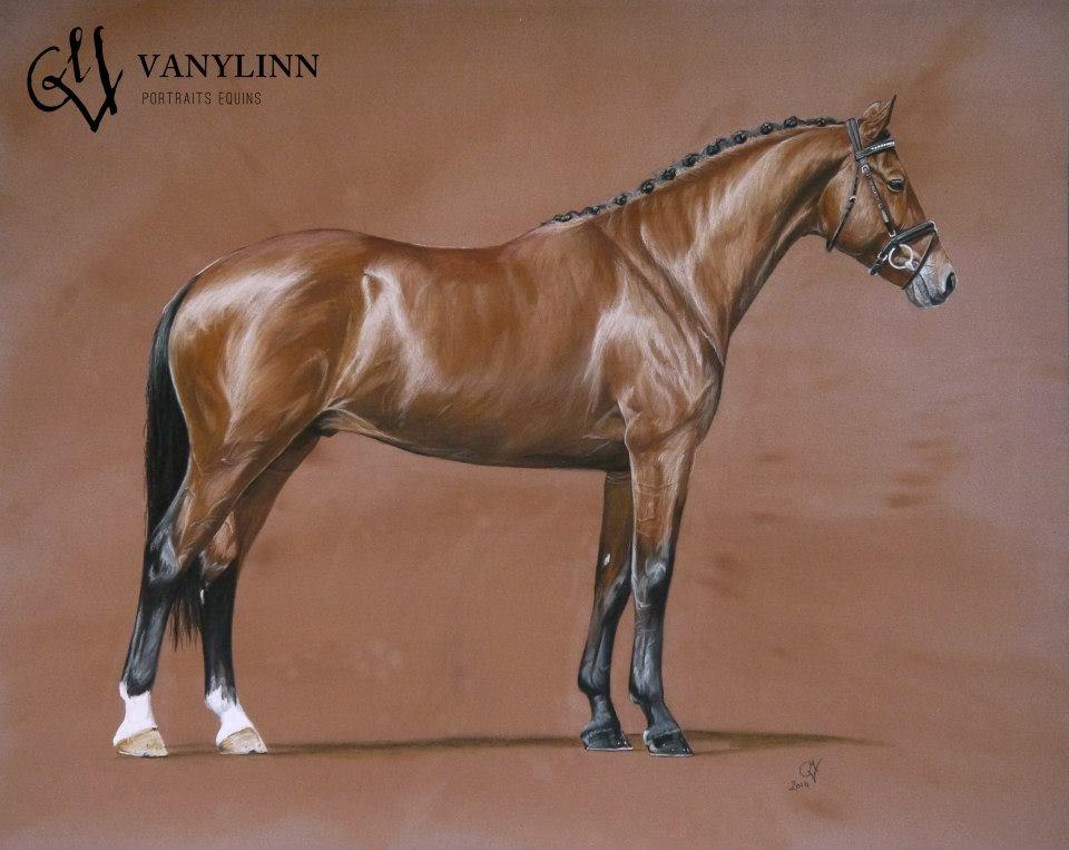 VANYLINN - Portraits equins - ZZ TOP étalon KWPN